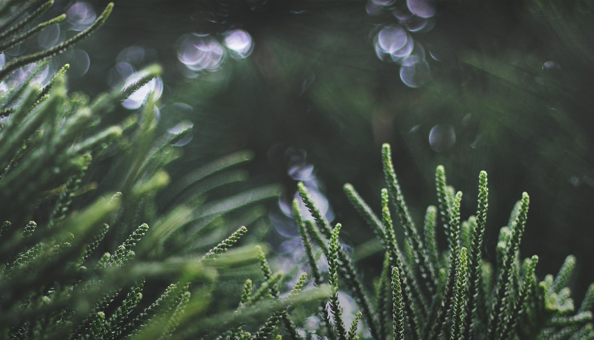 Frühjahrs-, Grab- & Adventsaustellung